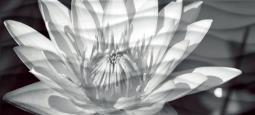 Вставка Cersanit Wave WA2G441D черно-белый 44x20