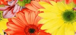 Бордюр Нефрит-керамика Кураж 2 05-01-1-93-00-45-074-0 25x11.5 Красный