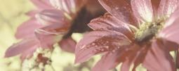 Панно Керамин Сиерра 3С тип 1 Розовый 50x20