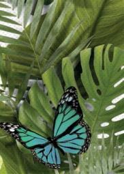 Вставка Cersanit Tropicana TC2M022DT зеленый 25x35
