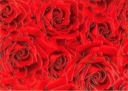 Декор Береза-керамика Престиж роза красный 25х35