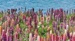 Декор Ceradim Flora Dec Flora 25x45